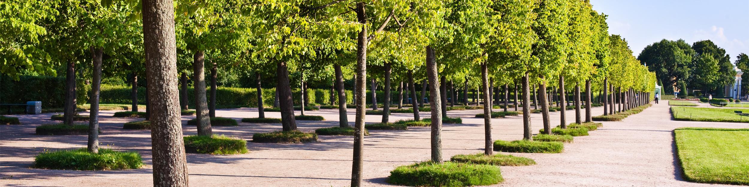 Tree Kits - Anchor Systems